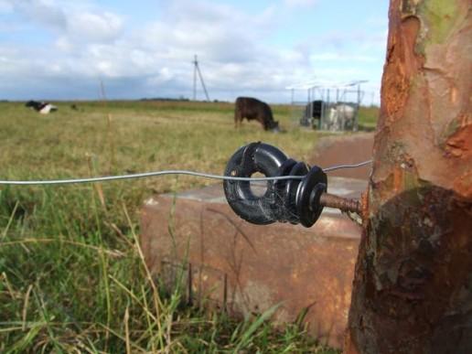 Elektrinis piemuo. Nuotrauka Gintaro Radzevičiaus