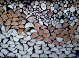 """Birutė Morkevičienė pristatė savo fotografijų parodą """"Medžių simfonija"""""""