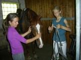 Raitelis ir žirgas – žavus duetas. Nuotraukos Violetos Astrauskienės
