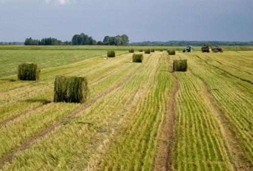 Nuotrauka Žemės ūkio ministerijos
