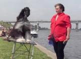 Rusnėje grožį demonstravo šunys