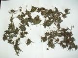 Rasta augalinės kilmės medžiagos, galimai kanapių, jų dalių bei šių augalų sėklų
