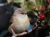 """Ornitologo Vytauto Jusio paukščių fotografijų paroda """"Sugrįš pavasarį saulėtą..."""""""