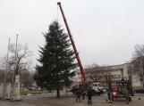 Į Šilutę atkeliavo Kalėdų eglė