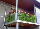 Balkonas 1