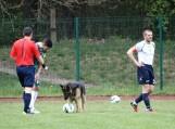 LFF I lygoje norėjęs žaisti futbolą keturkojis buvo išprašytas už tvoros. Nuotraukos Edvardo Lukošiaus