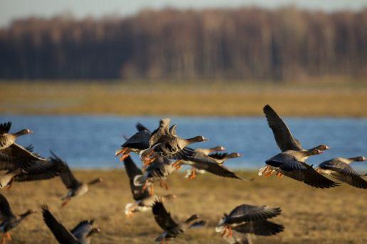 Nuotrauka Nemuno deltos regioninio parko