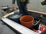 Už žalą žuvų ištekliams Kuršių mariose bauda tris tūkstančiai litų