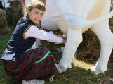 Paramos tvarka patvirtinta: pieno gamintojams atkeliauja 18 mln. eurų