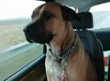 Policijos pareigūnai sureagavo į pranešimus dėl šuns