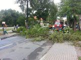 Išpuvę Šilutės medžiai ir toliau grąsina gyventojams