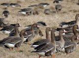 Nemuno deltos regioninį parką ne veltui vadinamame paukščių rojumi