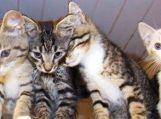 Specialistai pataria – atostogų metu katei saugiausia gyvūnų viešbutyje