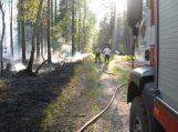 Sausa miško paklotė grasina gaisrais neatsargiems uogautojams