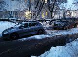 Medis užvirto ant dviejų automobilių