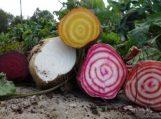 Derliaus šventė darže: kokiesodo ir daržo darbai dar liko?
