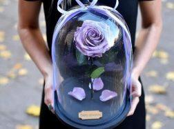 Stabilizuotos gėlės: kaip jas prižiūrėti?