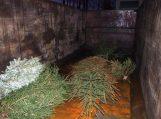 Atitarnavusios kalėdinės eglutės sušildys namus