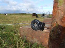 Bulius mirtinai sužalojo šeimininką