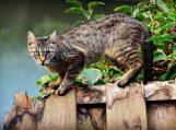 Hipoalerginis maistas katėms: būtinumas, pasirinkimas, kainos…