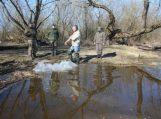 Vėgėlių paauginti jaunikliai įžuvinti Nemuno deltos regioniniame parke
