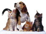 Nemokama gyvūnų sterilizacijos akcija