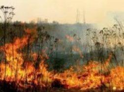 Pamaryje jau deginama žolė