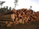 Apvaliosios medienos II pusmečio aukciono rezultatai