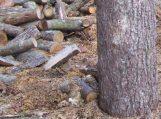 Rusniškis rado iškirstą 50 arų miško