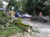 Medis moterį pražudė dėl savivaldybės darbuotojų aplaidumo