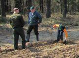 Tarptautiniams miškų metams paminėti – pasodintas buko miškas