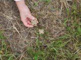 Prasideda pavasarinis laukinių gyvūnų vakcinavimas nuo pasiutligės