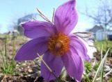 Senolių pastebėjimai: Pavasaris