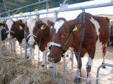 Nuo gegužės 1 d. reglamentuojamas gyvulių kergimas