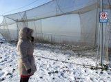 Kaip nesušalti ir kaip padėti sušalusiajam