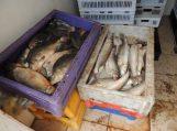 Žuvies perdirbimo įmonėje Šilutės rajone – antisanitarinės sąlygos ir nelegalūs darbuotojai