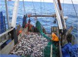 Paaiškėjo, kas žvejos Kuršių mariose ir Nemuno žemupyje