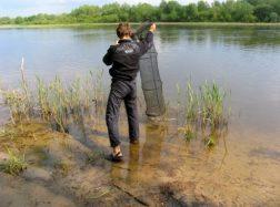 Karšiai, sugauti neršto metu – nuo balandžio 20 d. paleidžiami atgal į vandens telkinį