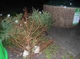 Gyventojai nupuoštas Kalėdines eglutes neša prie buitinių atliekų surinkimo konteinerių. Nuotraukos Gintaro Radzevičiaus